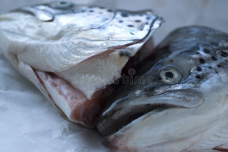Salmones foto de archivo