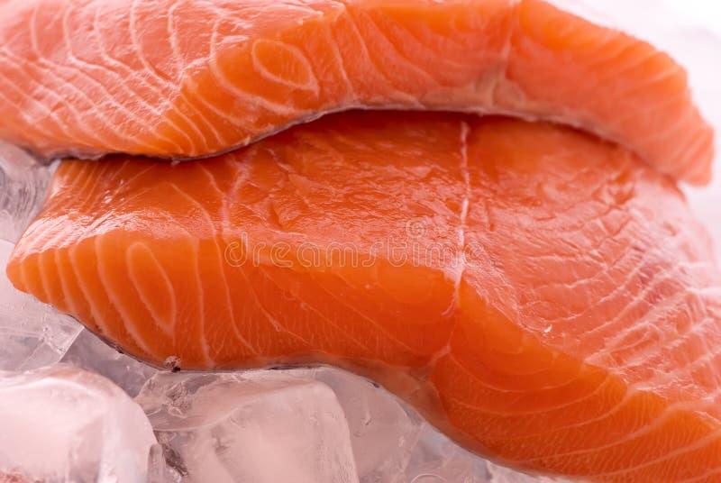 Salmones en el hielo fotos de archivo