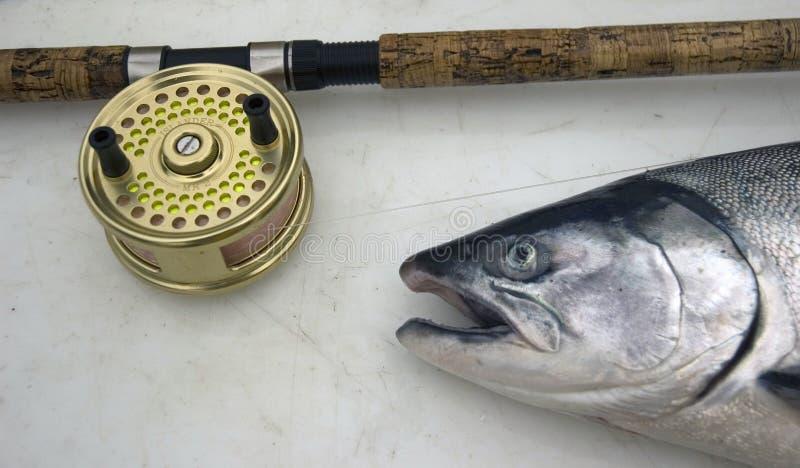 Salmoni di Coho immagini stock libere da diritti