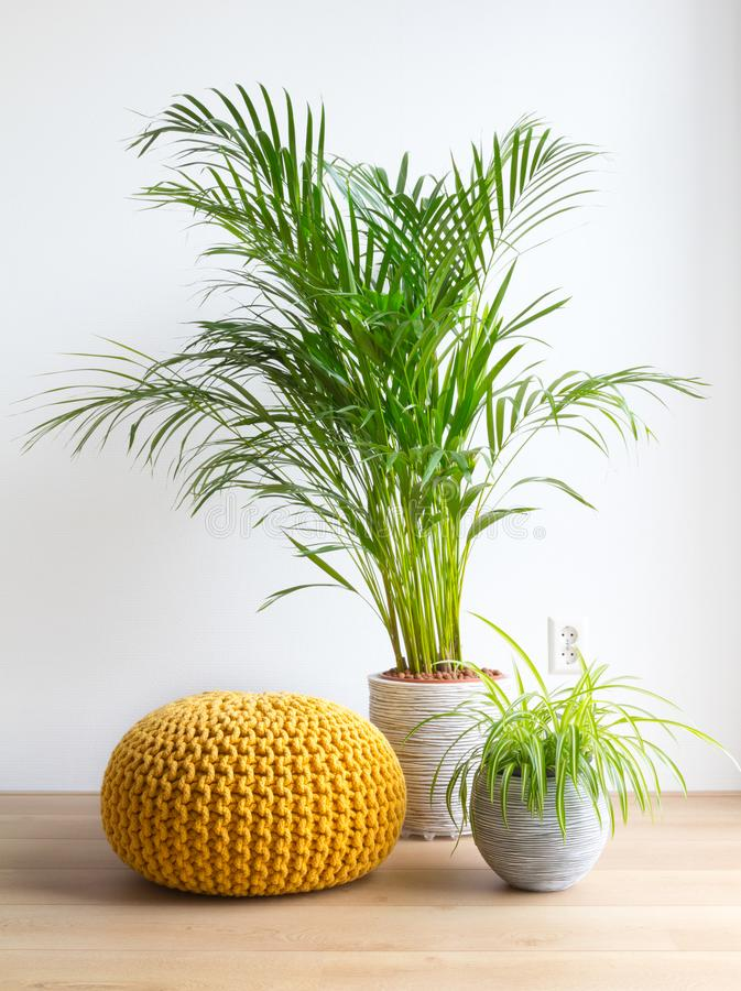 Salon avec les plantes d'intérieur et le pouf image libre de droits
