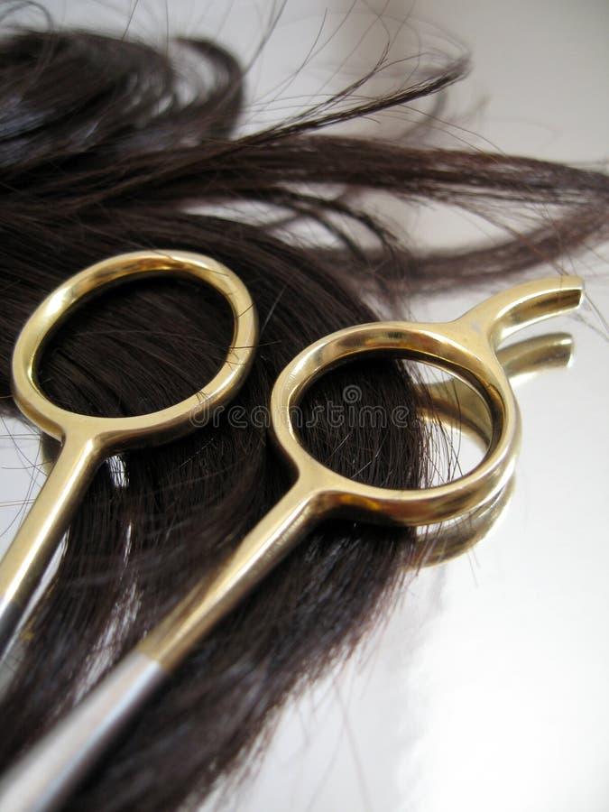 salong för 6 hår royaltyfria bilder