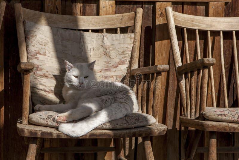Salotti del gatto in una sedia di legno immagine stock