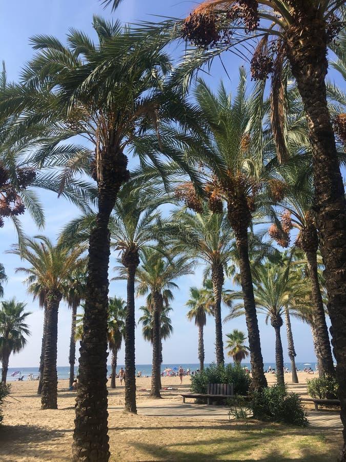 Salou strand bland palmträden fotografering för bildbyråer