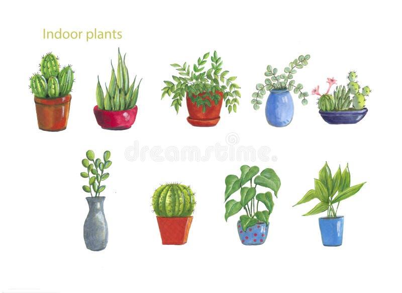 salowe dracaena rośliny dymią biel ilustracja wektor