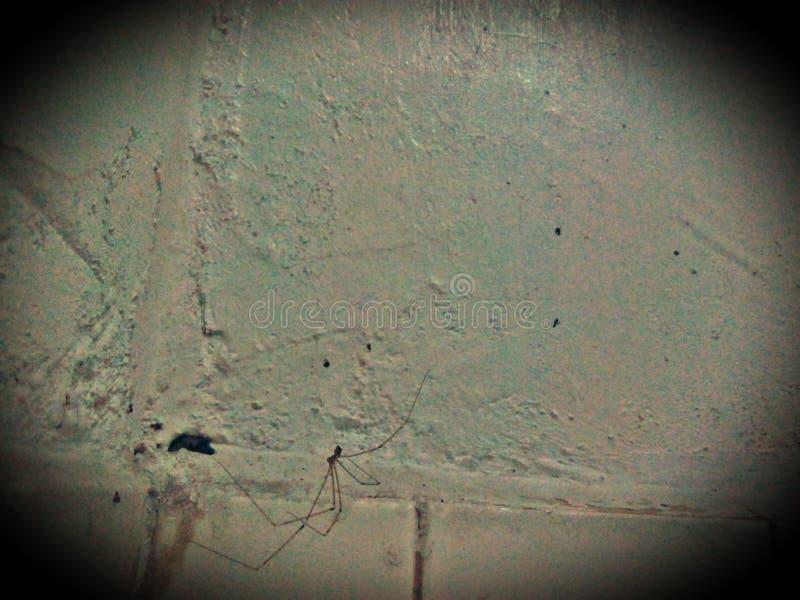 Salowego pająka łapać w pułapkę i łapać w pułapkę mrówki w pająk sieci fotografia royalty free