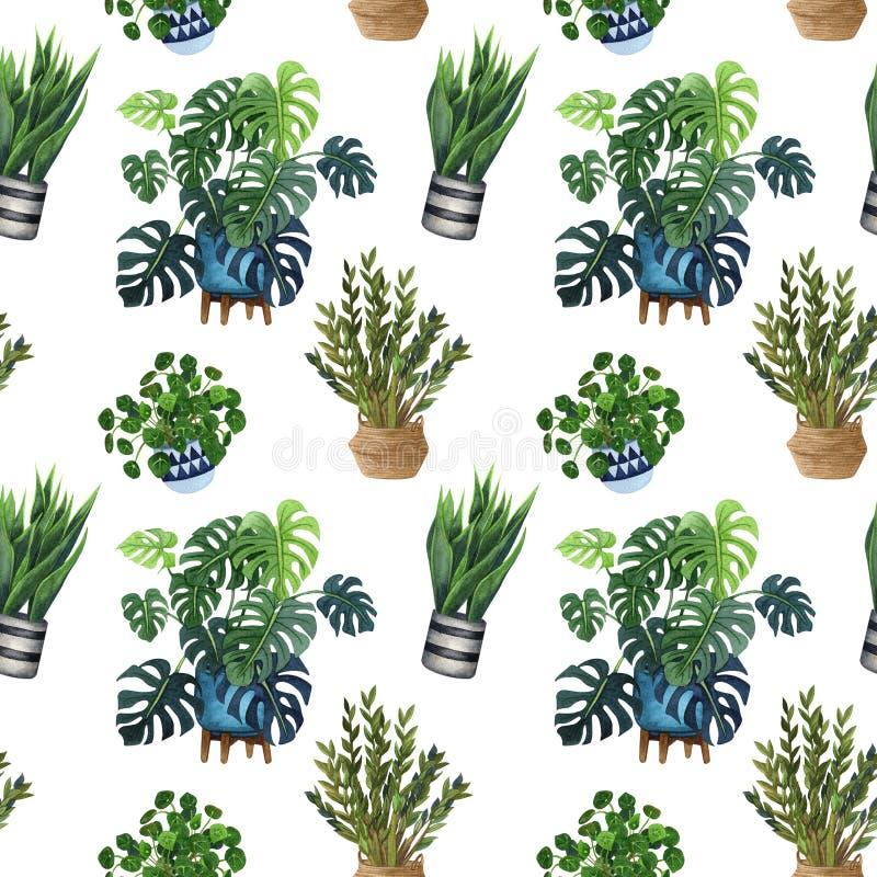 Salowej rośliny akwareli bezszwowy wzór Dom rośliny, figi drzewo, ZZ roślina Zamioculcas, wąż rośliny Sansevieria, skrzypk ilustracja wektor