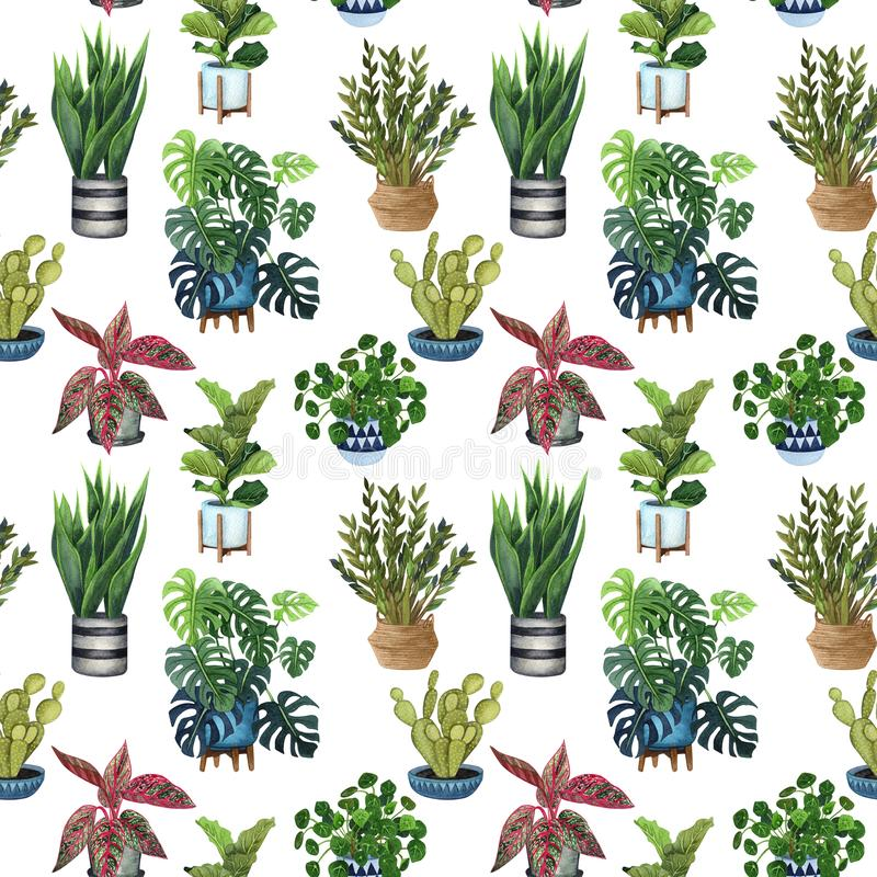 Salowej rośliny akwareli bezszwowy wzór Dom rośliny, figi drzewo, ZZ roślina Zamioculcas, wąż rośliny Sansevieria, skrzypk ilustracji