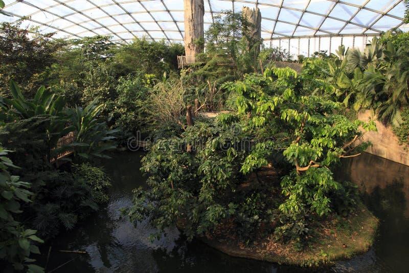Salowy tropikalny las deszczowy zdjęcie stock