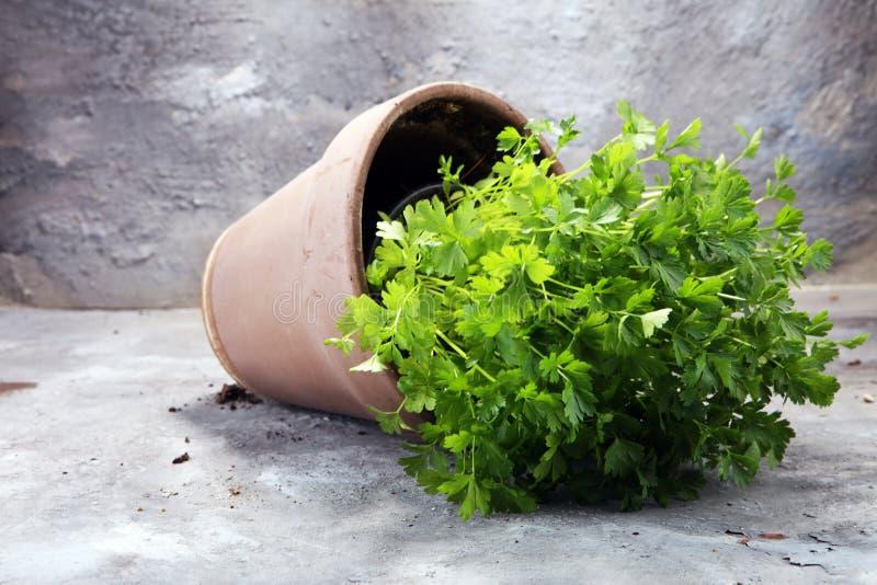 Salsa caseiro e aromática da erva no potenciômetro de argila velho imagens de stock