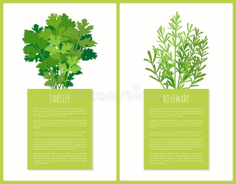 Salsa e Rosemary Greenery Set Vetora Poster ilustração do vetor