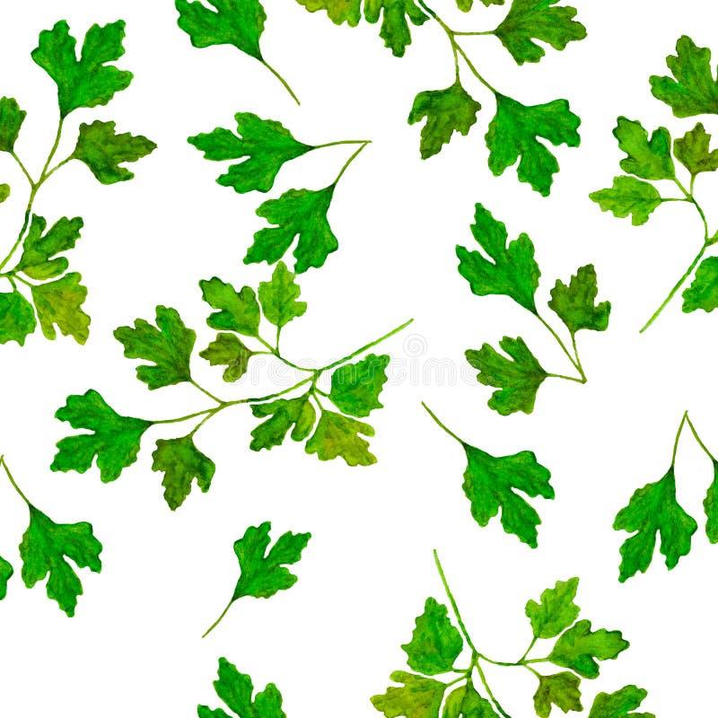 Salsa tirada mão da erva do teste padrão da aquarela Folhas e ramos da salsa em um fundo branco ilustração royalty free