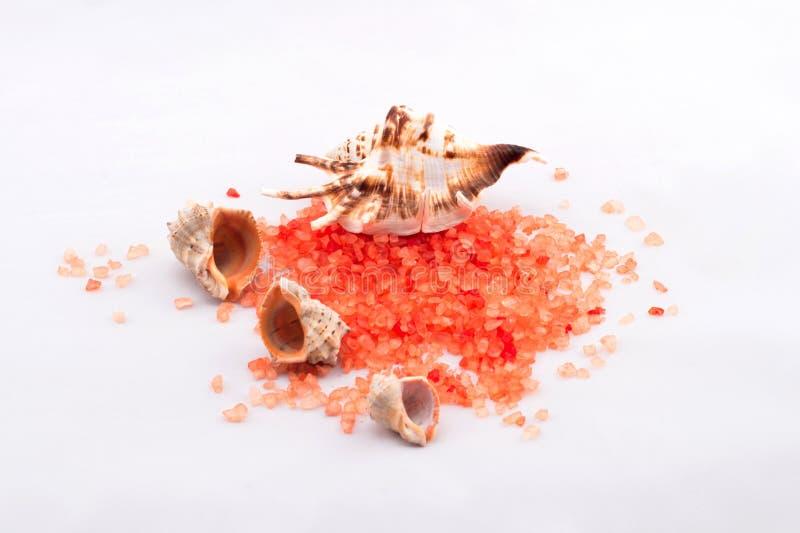 salt badorange fotografering för bildbyråer