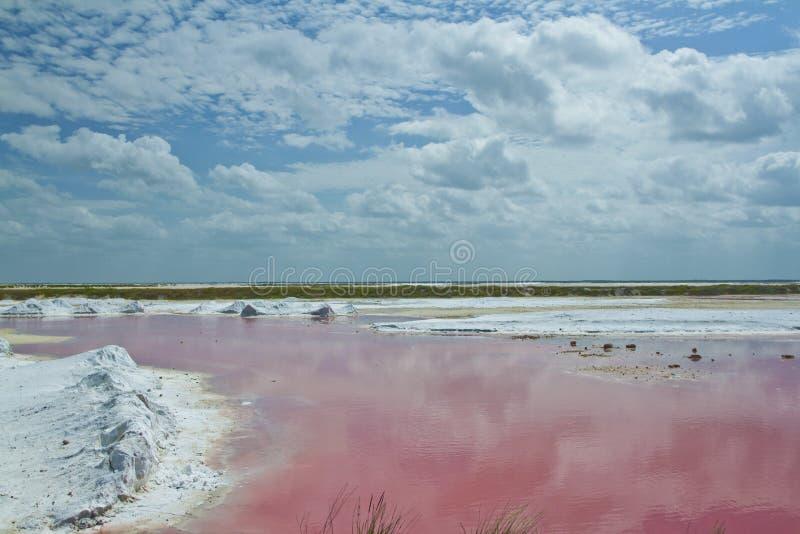Salt delar för Pink royaltyfria foton