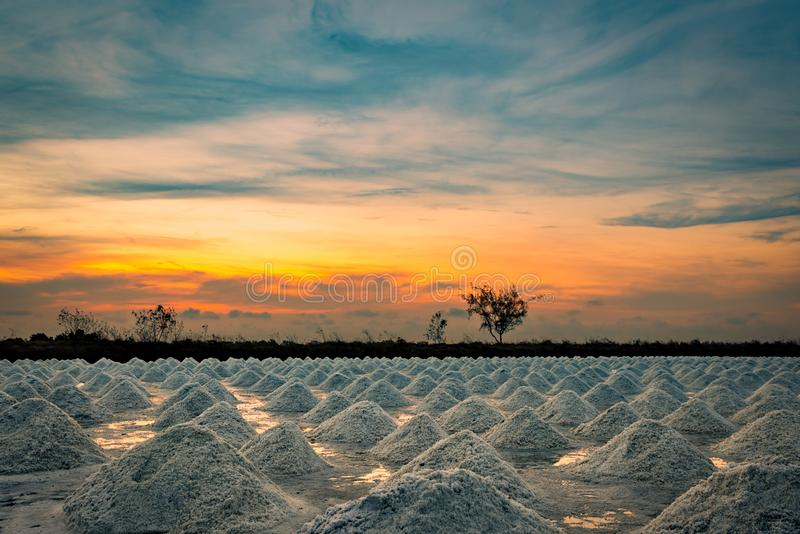 Salt farm in the morning with sunrise sky. Organic sea salt. Evaporation and crystallization of sea water. Raw material of salt. Industrial. Sodium Chloride royalty free stock photo