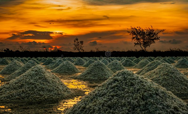 Salt farm in the morning with sunrise sky. Organic sea salt. Evaporation and crystallization of sea water. Raw material of salt in. Dustrial. Sodium Chloride stock photography