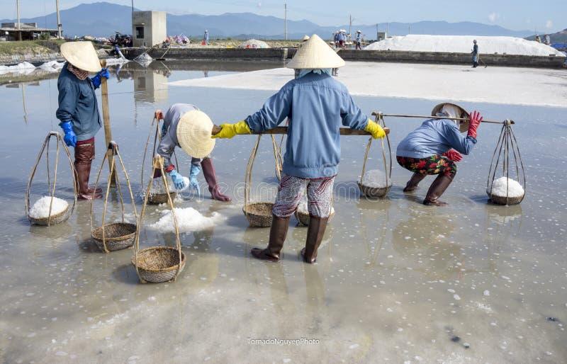SALT FIELD stock image