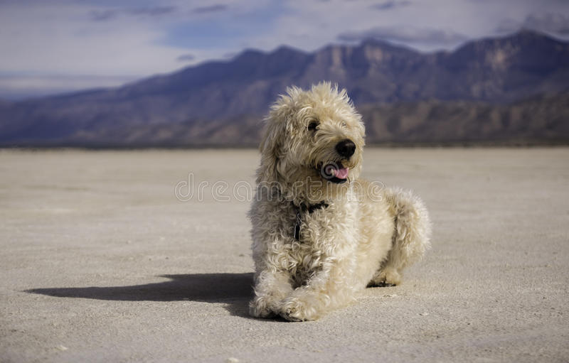 Salt hund royaltyfri foto