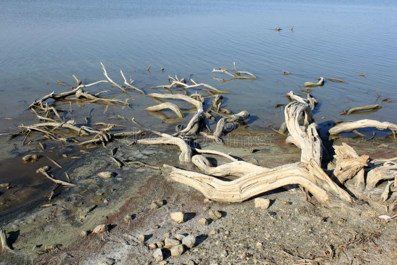 Salt lake stock image