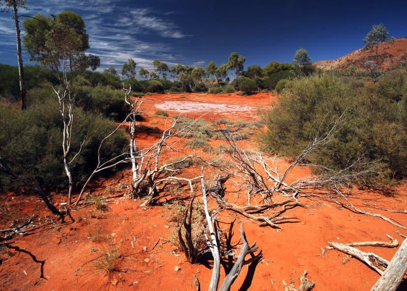 Salt Lake in deserto australiano fotografia stock libera da diritti