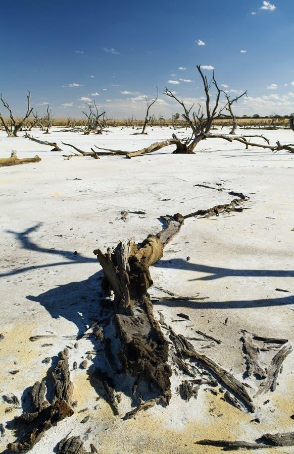 Salt Lakes and Dead Trees. Dead tree trunks and limbs on a white salt lake under blue sky stock photos