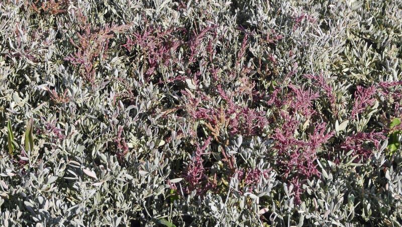 Download Salt marsh in autumn stock photo. Image of botanic, artemisia - 28595528