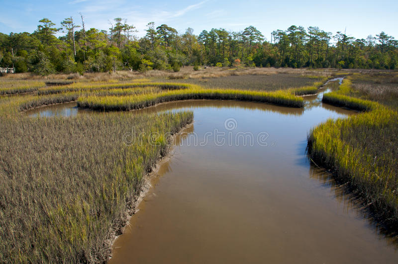 Salt marsh, with meandering streams, North Carolin royalty free stock photography