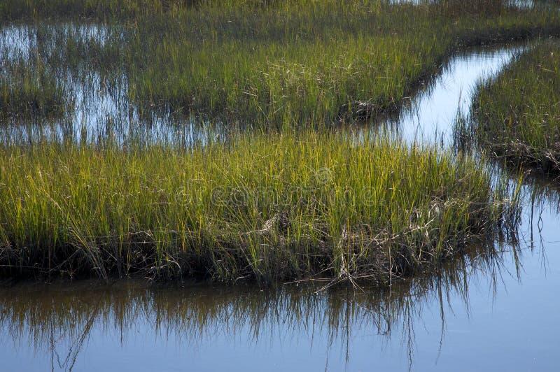 Salt marsh, North Carolina royalty free stock photo