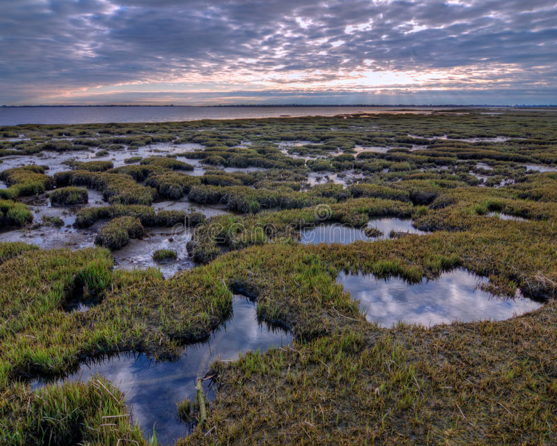 Download Salt Marsh Pools stock photo. Image of sunrise, clouds - 19758756