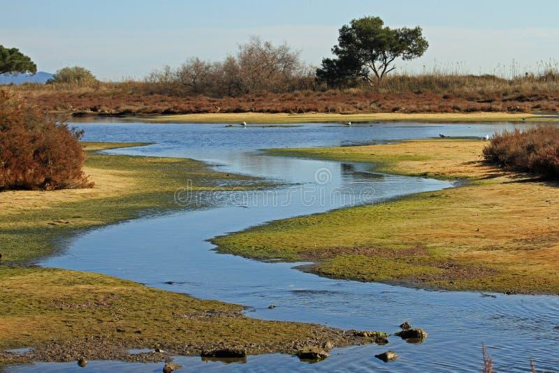 Salt-marshes royaltyfri foto