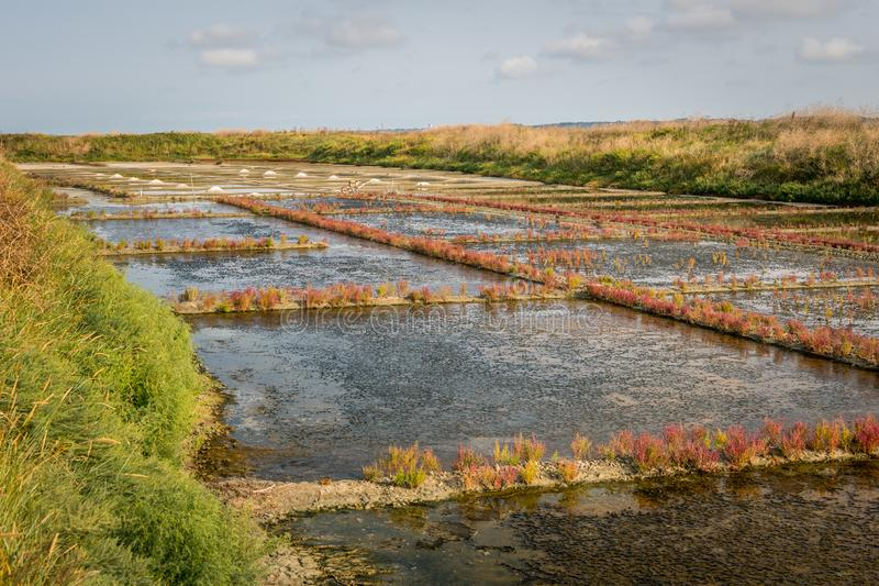 Salt marshes of Guerande on a sunny day in summer stock photography