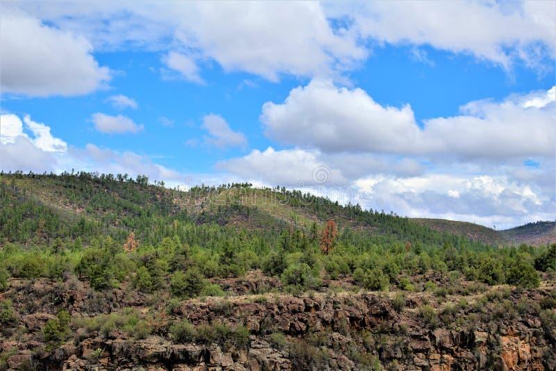 Salt River Schlucht-Wildnisgebiet, Tonto-staatlicher Wald, Gila County, Arizona, Vereinigte Staaten lizenzfreies stockbild