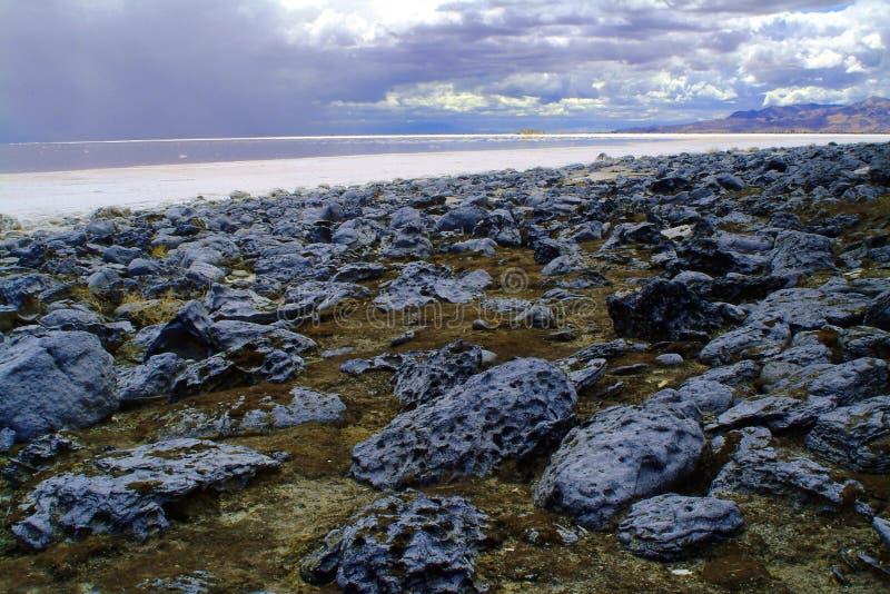 salt shoreline för stor lake arkivbild