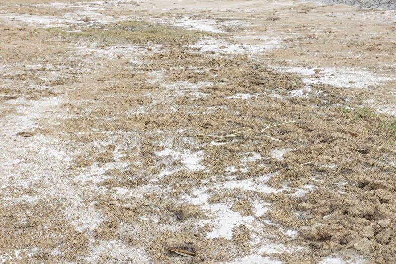 Salt stains royalty free stock photos