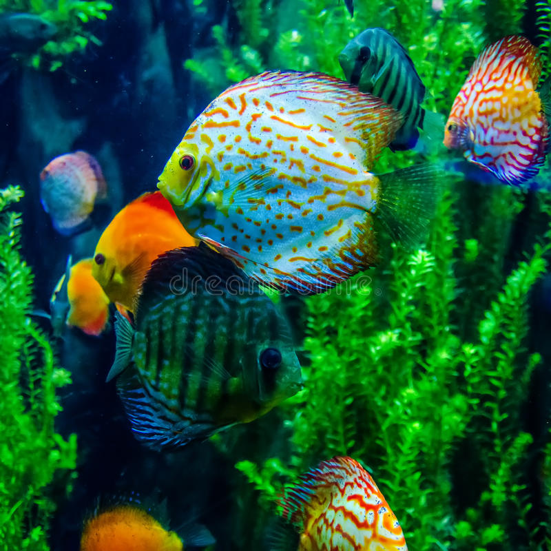 Salt water fish in the ocean. Or aquarium stock images