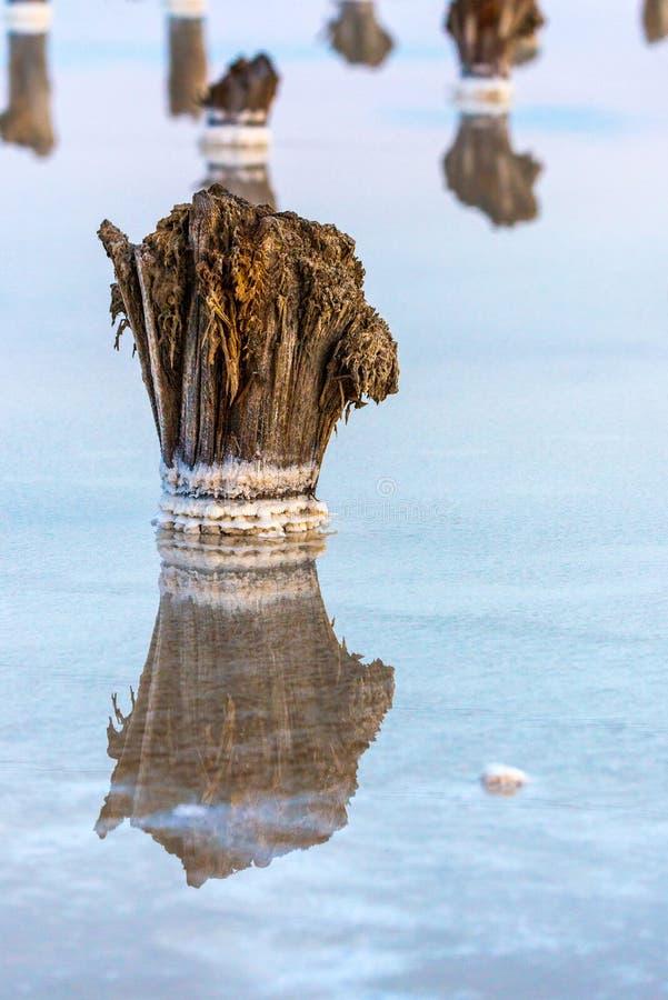 Salt on wooden log in water salt lake. Salt Lake Baskunchak, Russia. White, landscape, reflection, natural, nature, sky, summer, tourism, travel, mineral stock photo