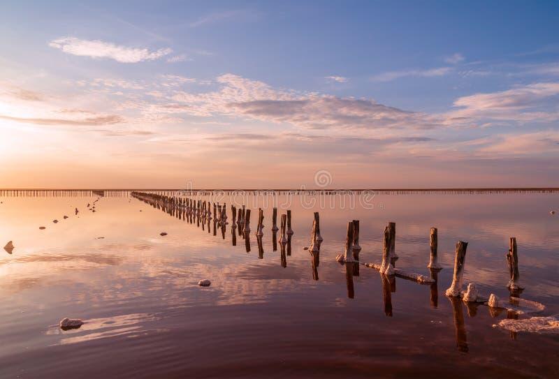 Salta damm för avdunstning för havsvatten med rosa plankton färgar royaltyfri foto