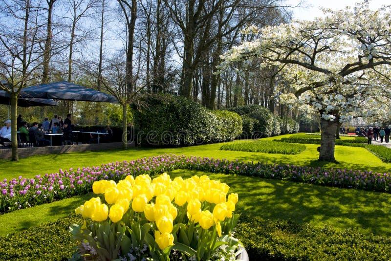 Salta en el parque - tulipanes florecientes, flores de cerezo blancas, gente el caminar o el sentarse en parque foto de archivo libre de regalías