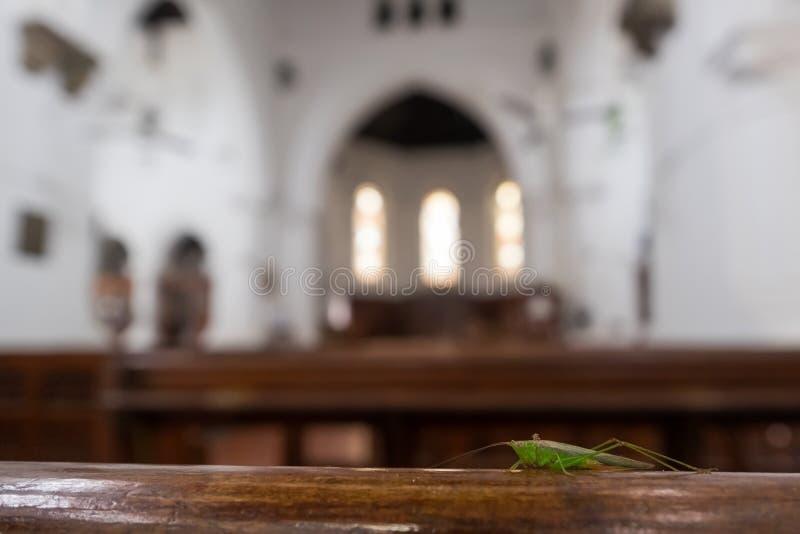 Saltamontes que se sienta en banco en iglesia foto de archivo
