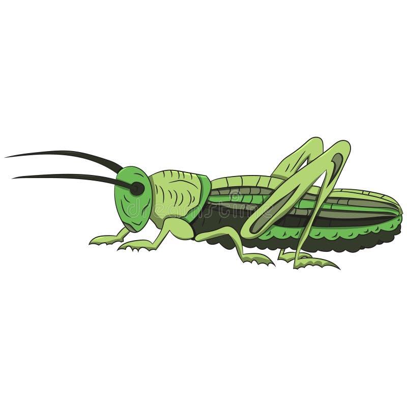 Saltamontes verde en un fondo blanco Ilustración del vector Gráfico de la mano libre illustration