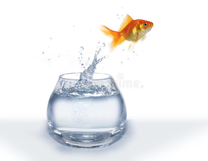 Saltando dai pesci dell'acquario fotografia stock