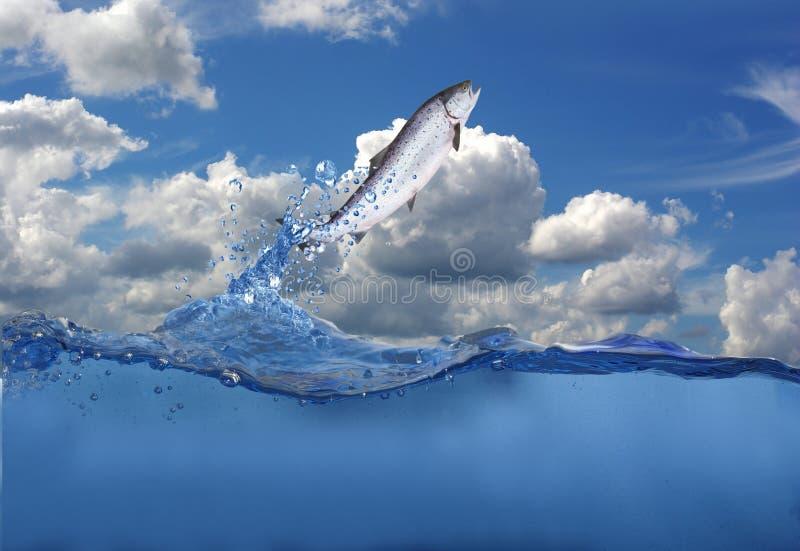 Saltando dai salmoni dell'acqua immagini stock