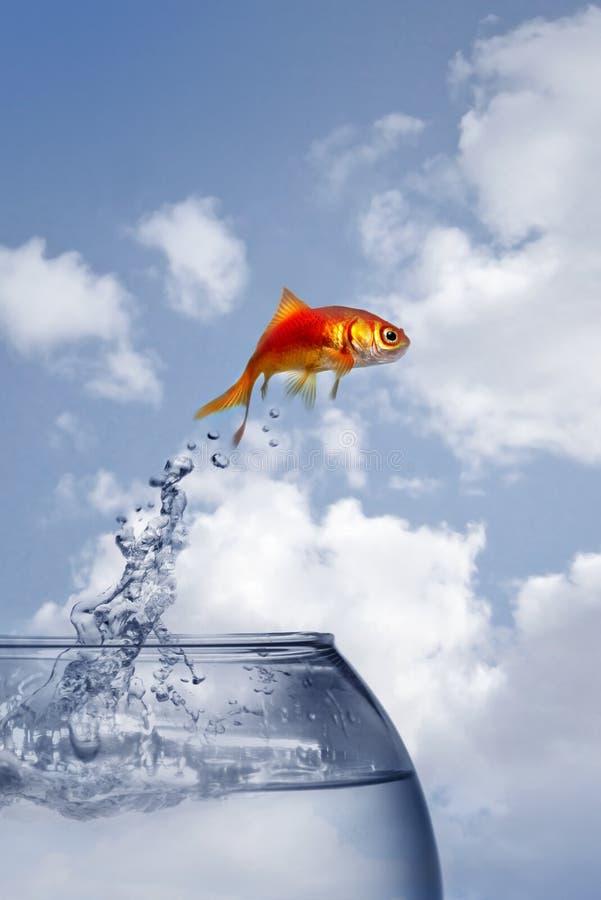 Saltar do Goldfish da água fotografia de stock