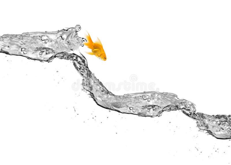 Saltar do Goldfish da água imagem de stock royalty free