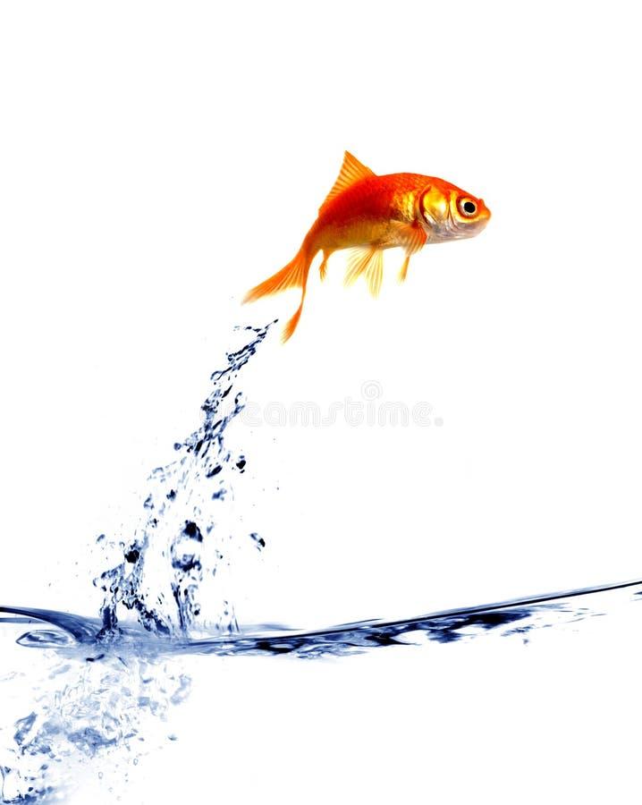 Saltar do Goldfish da água fotos de stock