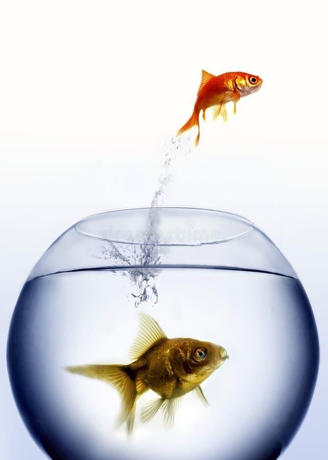 Saltar do Goldfish da água fotografia de stock royalty free