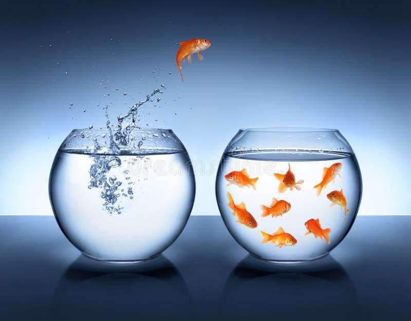 Saltar do peixe dourado da água imagens de stock royalty free