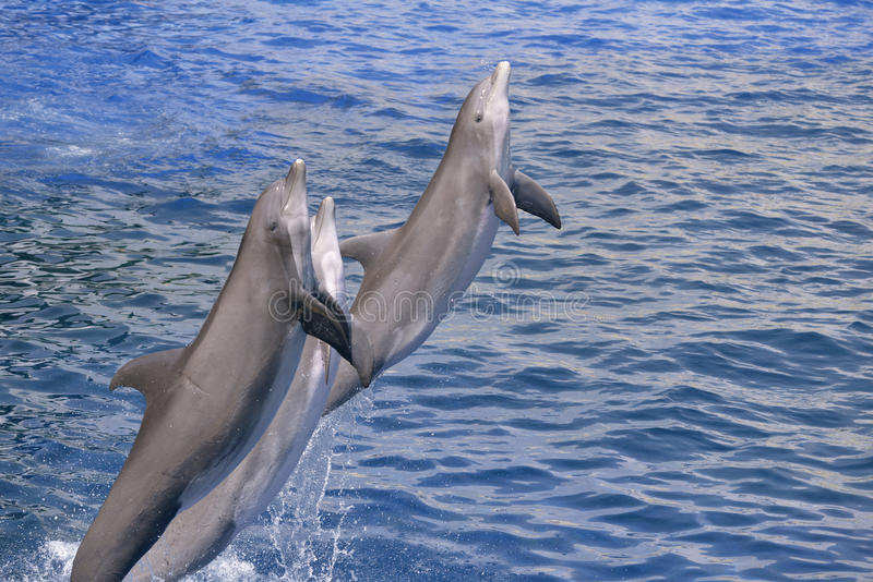 Saltar dos golfinhos da água fotos de stock royalty free