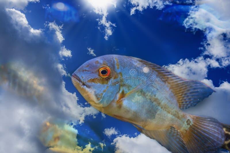 Saltare dei pesci dell'acqua Concetto creativo di libertà Spirito libero, nuoto del cielo blu immagine stock