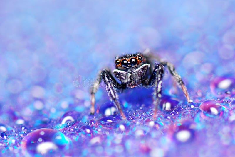 Salte a aranha imagem de stock royalty free
