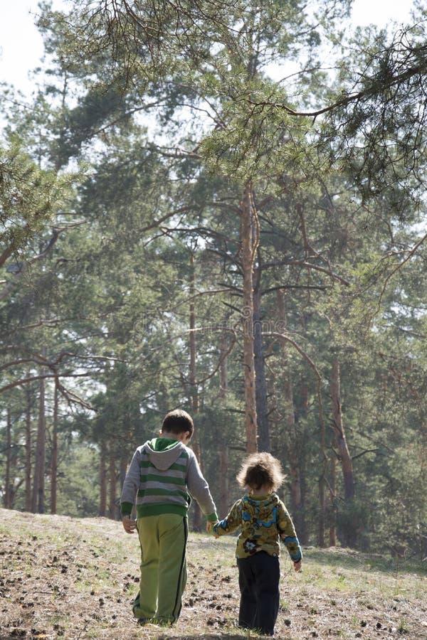 Salte em uma floresta do pinho com a irmã mais nova do irmão que guarda as mãos foto de stock